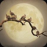la luna by andrew cowell